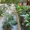 Courtyard Garden | Grosvenor Court Apartments